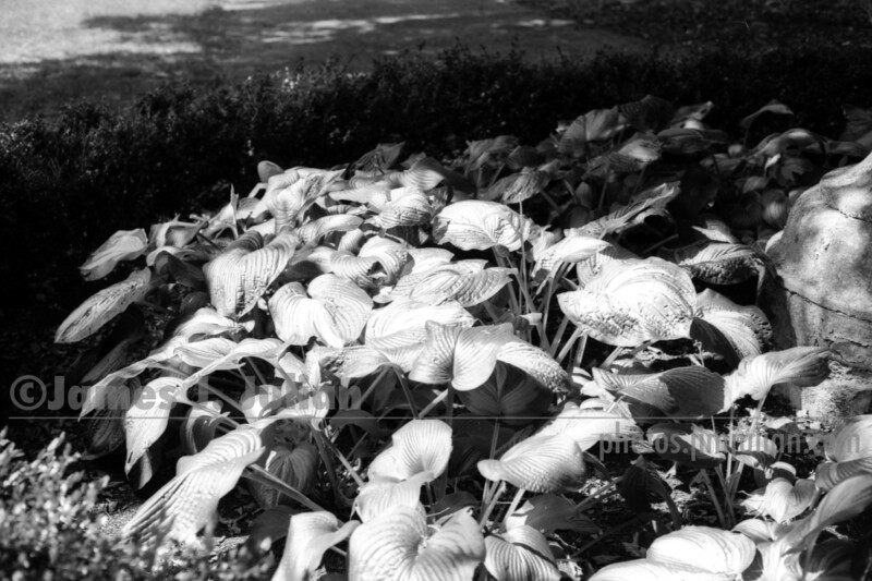 Centerpiece Leaves in Shadow BW