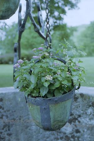 Well Bucket Plant