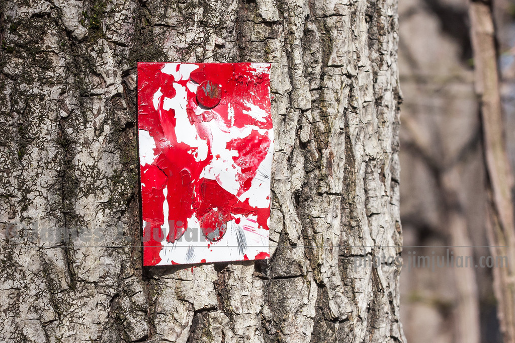Chipped Red Trail Marker Nailed to a Tree