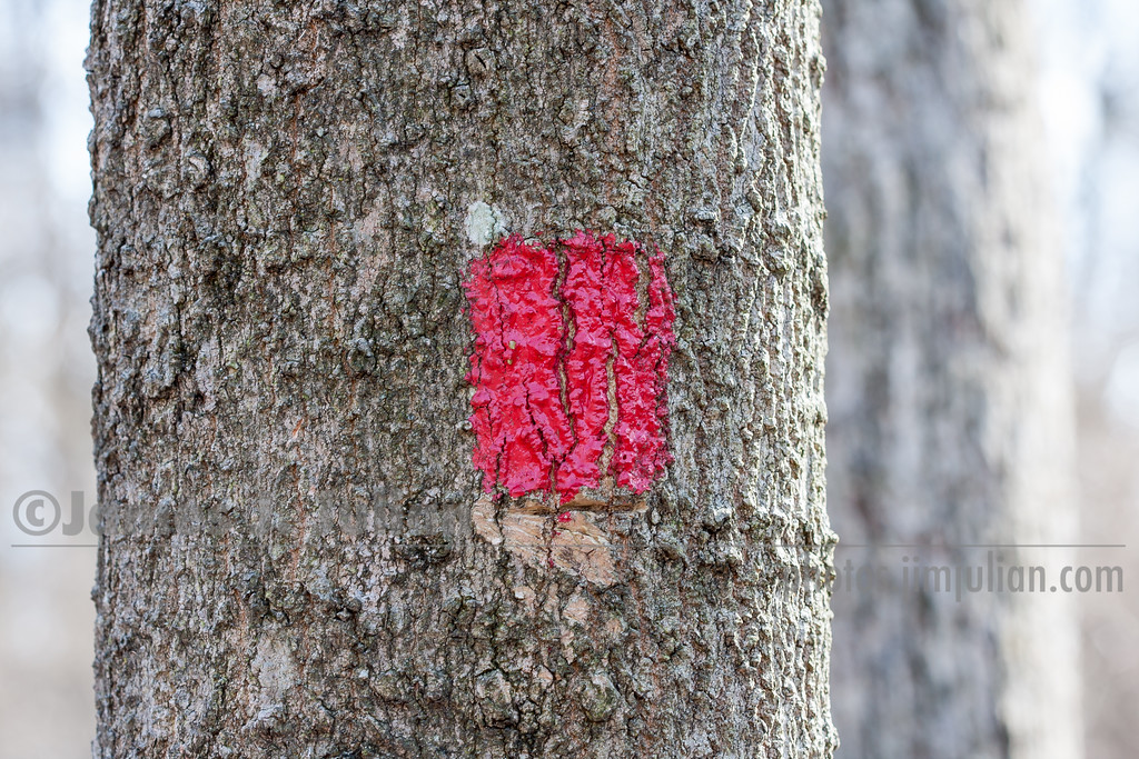 Trail Marker Painted on a Tree