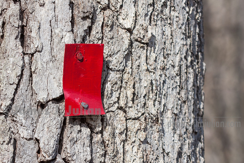 Red Trail Marker Nailed to a Tree