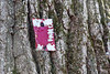 Red Flake Painted Trail Marker