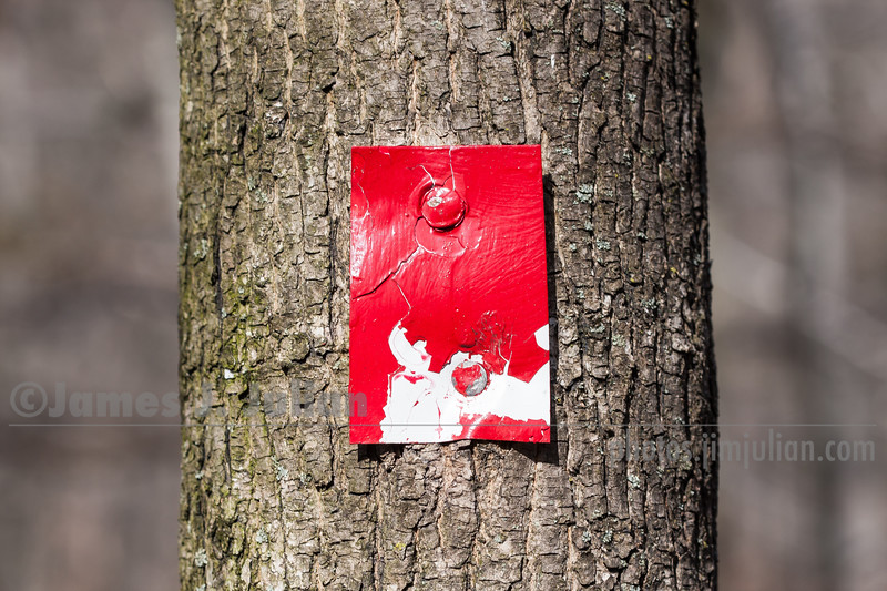 Mostly Red Trail Marker Nailed to a Tree
