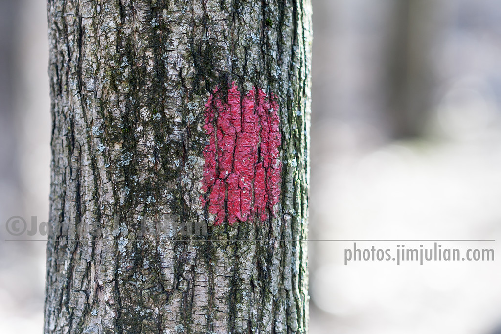 Trail Marker Thinly Painted on a Tree