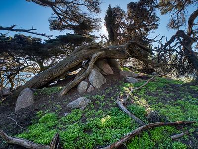 Point Lobos State Preserve