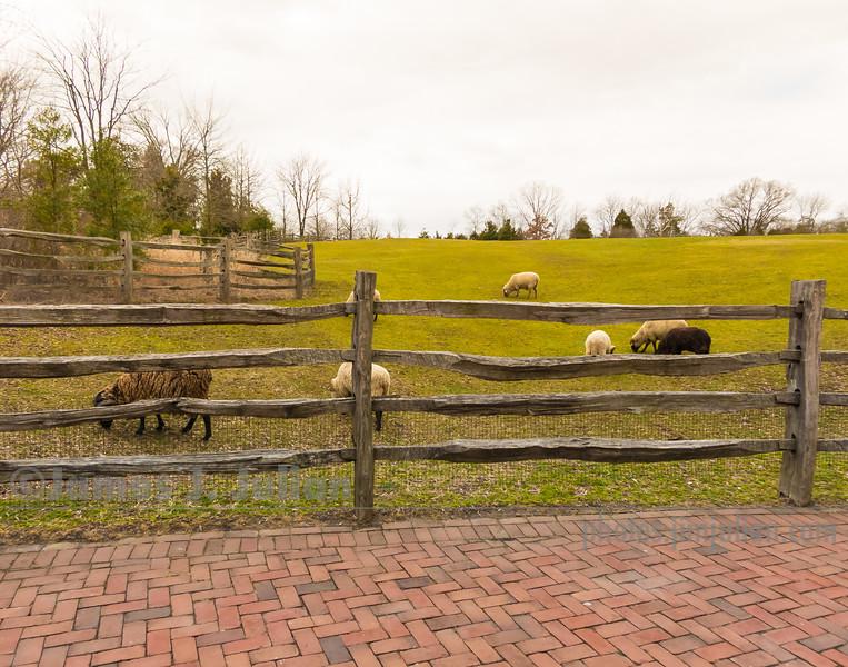 Pasture in Mount Vernon