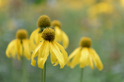 2014-08-23_Spearfish Valley_Zwit_0011