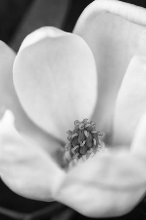 2012-04-29_Magnolia_Zwit_0016_E