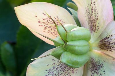 2012-03-18_Green Spring Gardens_Zwit_0086-Edit