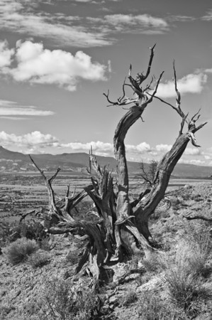 2010-07-23_Ghost Ranch_Zwit_0069-Edit