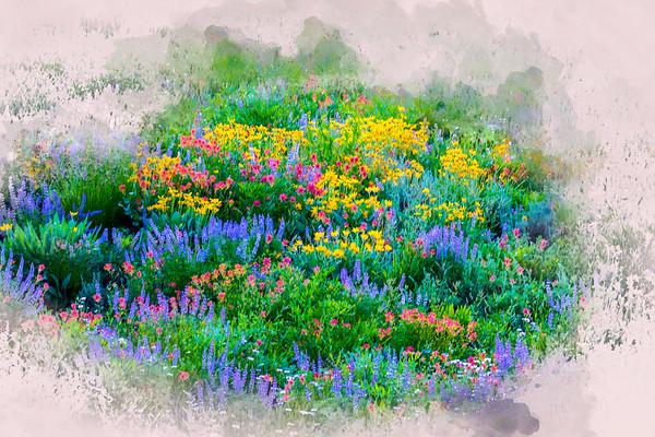 Wood's Lake Wildflowers