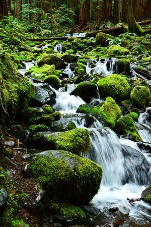 Moss an stream