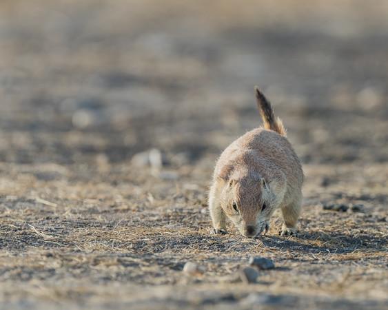 2014-08-19_Badlands Natl Park_Zwit_0318