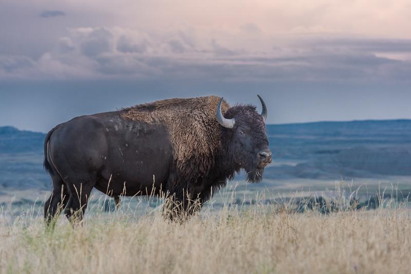 2014-08-19_Badlands Natl Park_Zwit_0584