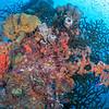 Coralful