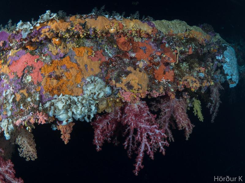 Coral beam