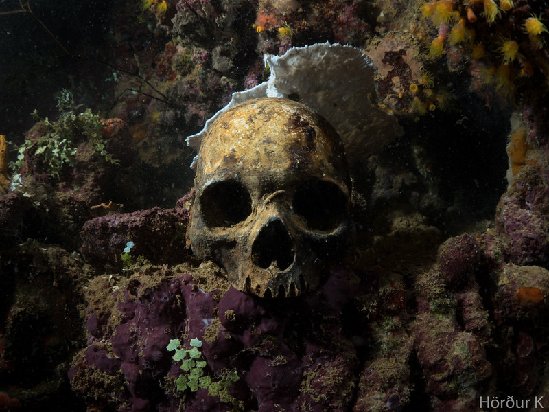 Skull at the Yamagiri Maru