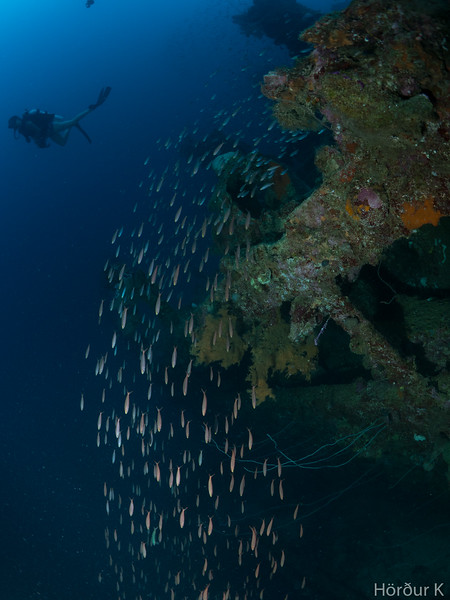 Diver, fish, wreck