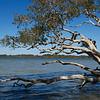 Lake Weyba, Sunshine Coast Australia