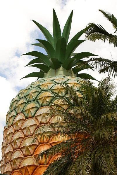 Big Pineapple on the Sunshine Coast