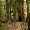 Rain forest on Fraser Island Queensland Australia