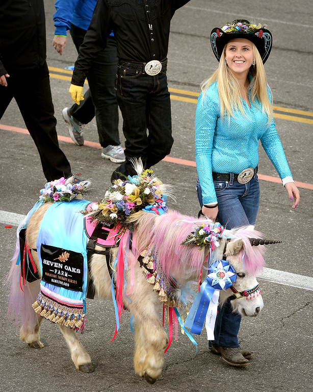 . So Cal Mini Horse Sanctuary from Hemet, Calif. during the Rose Parade in Pasadena, Calif. on Monday, Jan. 2, 2017.  (Photo by Leo Jarzomb, SGV Tribune/ SCNG)