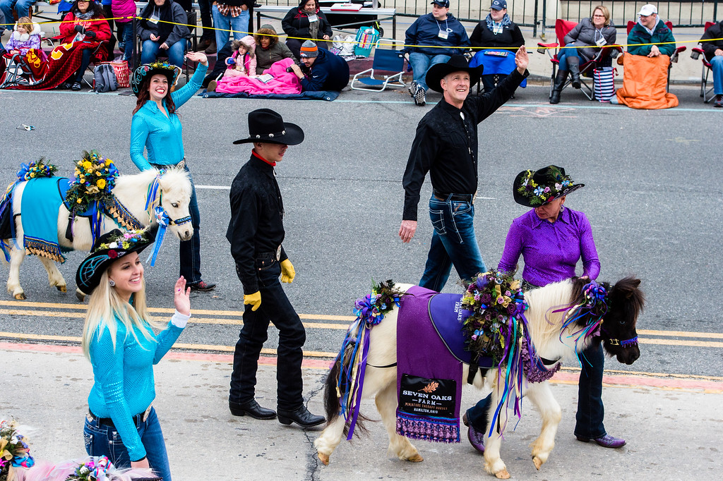 . Seven Oaks Farm Miniature Therapy Horses on Colorado Blvd. during the 2017 Rose Parade in Pasadena on Monday, January 2, 2017. (Photo by Watchara Phomicinda, San Gabriel Valley Tribune/ SCNG)