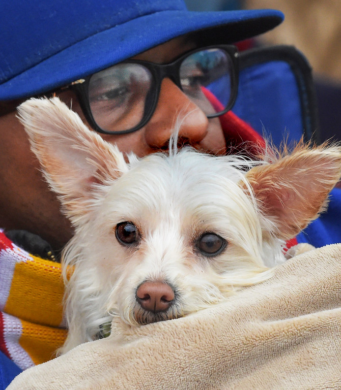 """. Mike Payne of Los Angeles with his dog �Maya�.128th Rose Parade \""""Echoes of Success\"""". (Photo by Walt Mancini/SCNG)"""