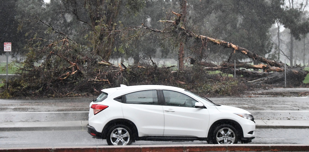 . Feb 17,2017. Lake Barboa Ca. One of many huge trees blown down along Balboa golf course from todays most powerful storm to hit the Southland in seven years is moving across the region, bringing heavy winds, snow and torrential rain that has raised the specter of flash flooding.   Photo by Gene Blevins/LA DailyNews/SCNG