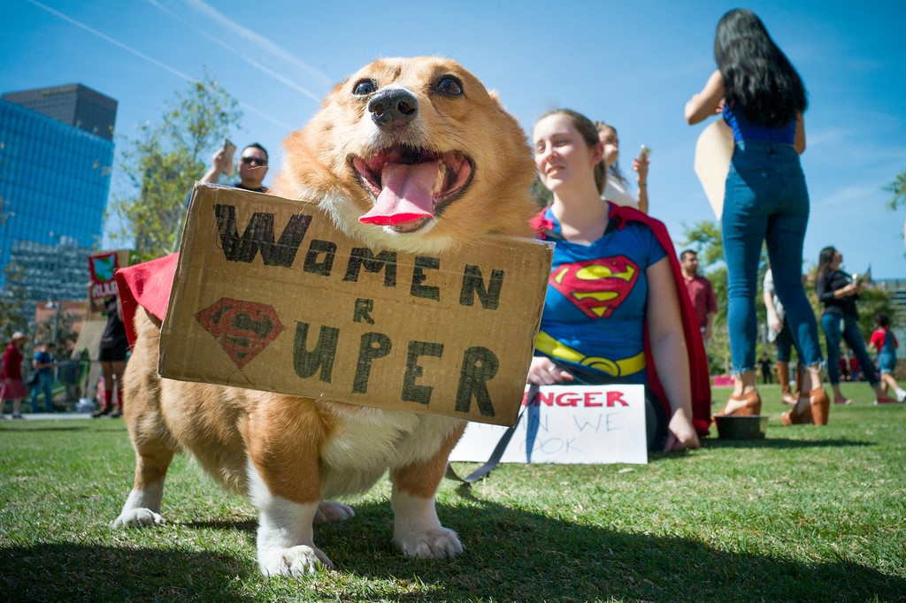 """. \""""Ein\"""" and his owner Katelyn White from Dallas, Texas, at a march marking \'A Day Without a Woman\' in downtown Los Angeles on Wednesday, March 8, 2017.  Similar events were staged throughout the country and worldwide.  (Photo by David Crane, Los Angeles Daily News/SCNG)"""