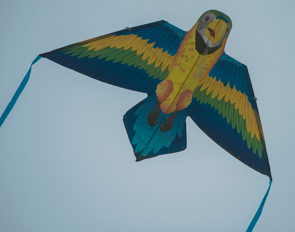 . The 43rd Annual Festival of the Kite at the Redondo Beach Pier in Redondo Beach Sunday, March 12, 2017. (Photo by Thomas R. Cordova, Daily Breeze/SCNG)