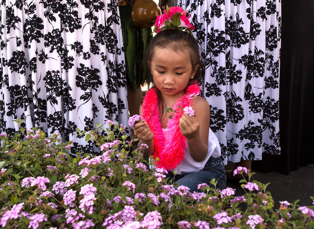. Catherine Dira, 4, a member of the Halau Na Pua Lehua I Ka Ua Noe group, picks flowers during The Annual West Covina Cherry Blossom Festival in West Covina on Saturday, March 18, 2017. (Photo by Ed Crisostomo, Los Angeles Daily News/SCNG)