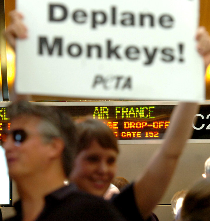 . PETA members protest in front of the check in desk of Air France inside of the Tom Bradley International Terminal at Los Angeles International Airport in Los Angeles, CA. Monday April 28, 2014. According to PETA Air France is the only major airline in the world that still ships primates to laboratories. (Thomas R. Cordova/Press-Telegram/Daily Breeze)