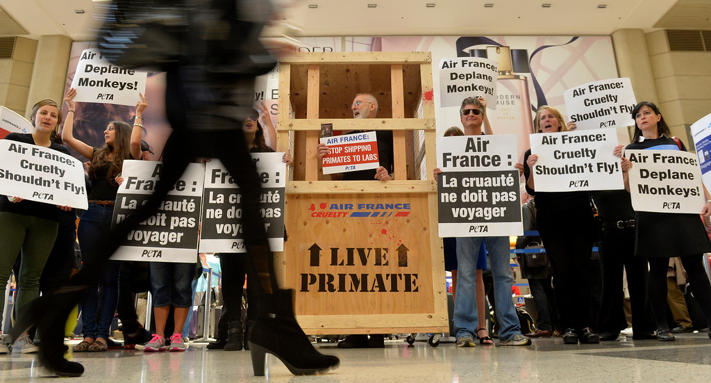 . A airport passenger makes her way through more than 50 PETA members and actor James Cromwell, in a shipping crate, protested in front of the check in desk of Air France inside of the Tom Bradley International Terminal at Los Angeles International Airport in Los Angeles, CA. Monday April 28, 2014. According to PETA Air France is the only major airline in the world that still ships primates to laboratories. (Thomas R. Cordova/Press-Telegram/Daily Breeze)