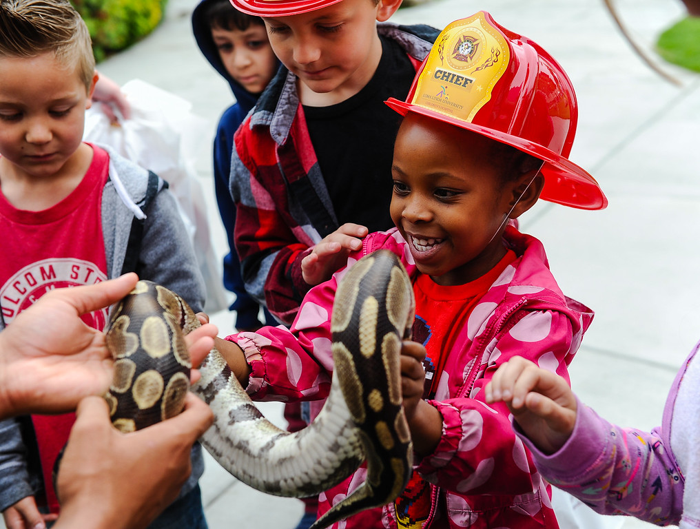 . Sundance Elementary student Shanelle Garner, 6, holds a snake during the 32nd annual Children\'s Day at Loma Linda University Children\'s Hospital in Loma Linda, Calif. on Wednesday, May 10, 2017. Children were invited to learn what it\'s like to work in the medical field during the annual event. (Photo by Rachel Luna, Redlands Daily Facts/SCNG)