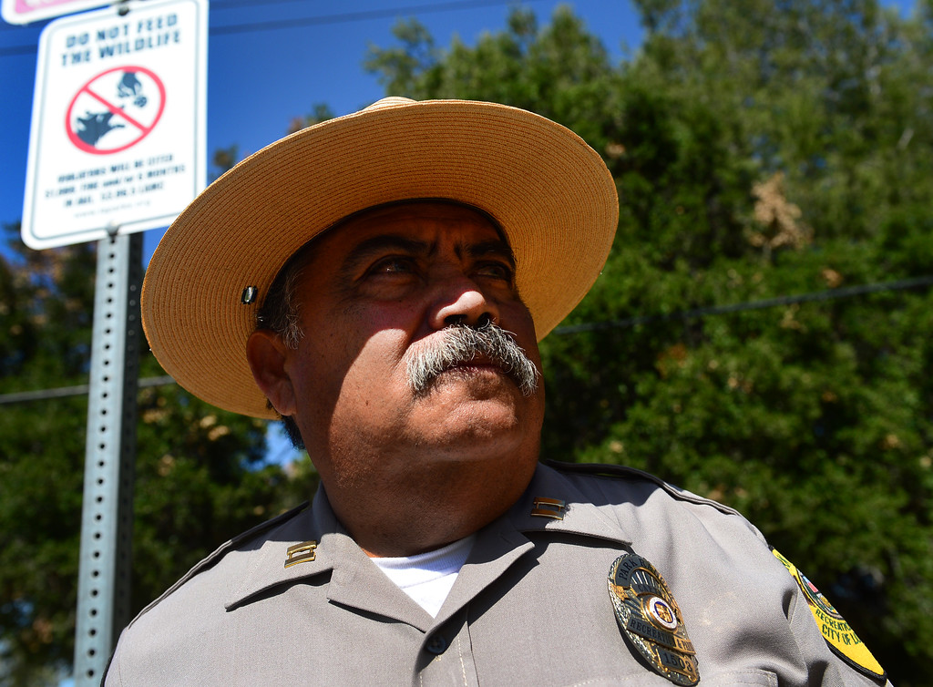 . Park Ranger, Captain Albert Torres, says it is all about educating our patrons on how to have a good experience for ourselves and the wildlife around us in Griffith Park on Friday, June 9, 2017.  The Los Angeles Department of Recreation and Parks is stepping up efforts to discourage park-goers from feeding coyotes. Park rangers say they are seeing a growing number of coyotes hovering around picnic areas in city parks because people are giving the animals burritos and other human food.  This is harmful to the coyotes because they begin to lose their desire to hunt and they lose their fear of humans. Also, while coyote attacks on humans are rare,  most of the attacks that do occur take place as result of people feeding them the animals.  (Photo by Dean Musgrove, Los Angeles Daily News/SCNG)