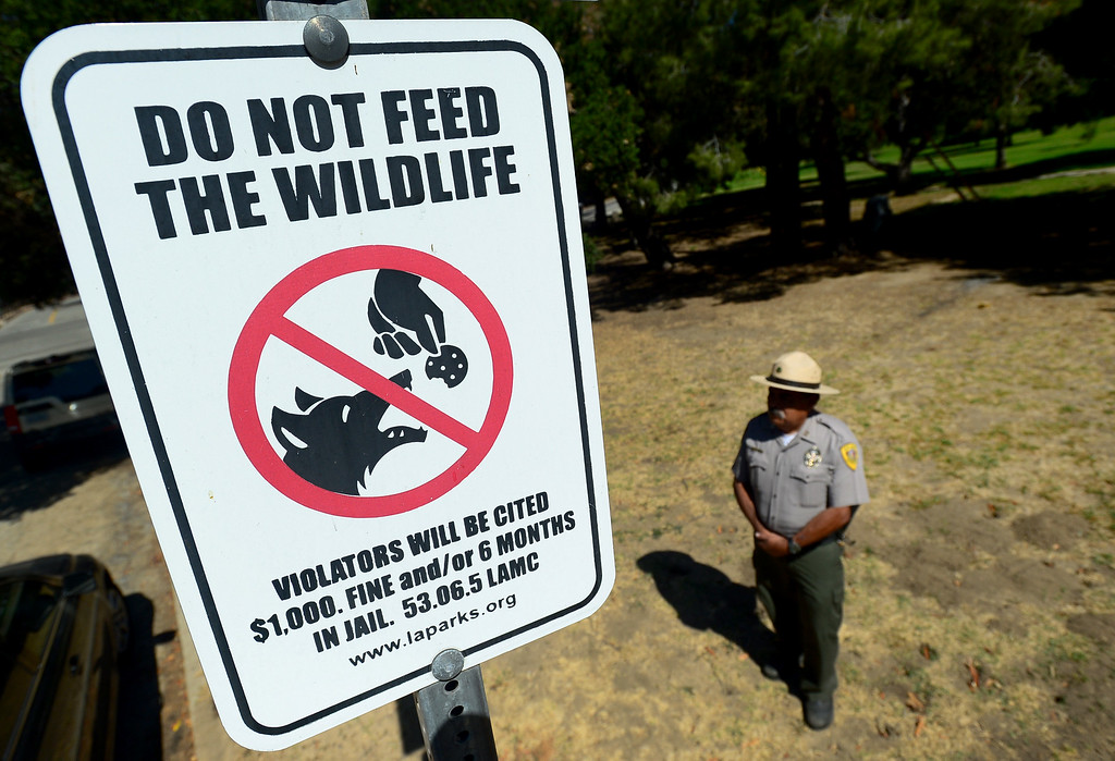. Park Ranger, Captain Albert Torres, stands near one of the signs in Griffith Park on Friday, June 9, 2017.  The Los Angeles Department of Recreation and Parks is stepping up efforts to discourage park-goers from feeding coyotes. Park rangers say they are seeing a growing number of coyotes hovering around picnic areas in city parks because people are giving the animals burritos and other human food.  This is harmful to the coyotes because they begin to lose their desire to hunt and they lose their fear of humans. Also, while coyote attacks on humans are rare,  most of the attacks that do occur take place as result of people feeding them the animals.  (Photo by Dean Musgrove, Los Angeles Daily News/SCNG)