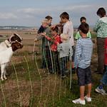 Die Ziegen am Grünen Heiner