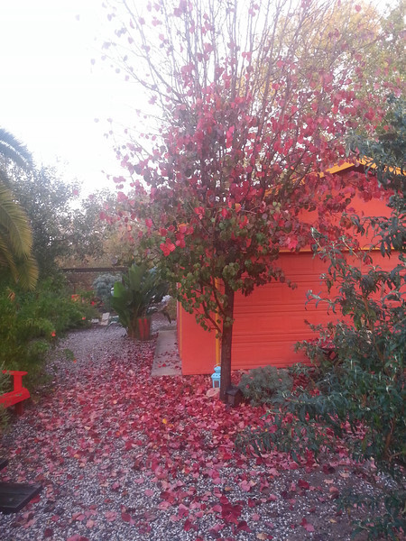 Backyard fits well into the color scheme