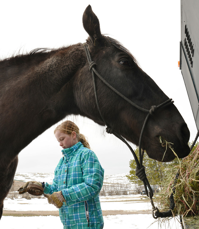 Kadynce French pauses to pull hair from the brush while grooming Pepper, a Missouri Fox Trotter, Tuesday at the French residence East of Sheridan on Peno Road.