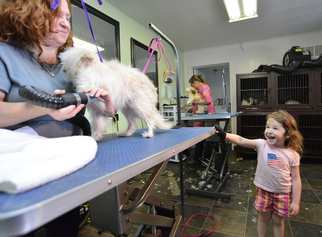 3-year-old Jettie Sullivan catches some air in her face as Marci Sullivan blow-dries a client's dog Thursday at Pride and Groom dog grooming salon on Lewis Street. The business has been in Sheridan for more than 20 years when Sullivan purchased it a year ago.