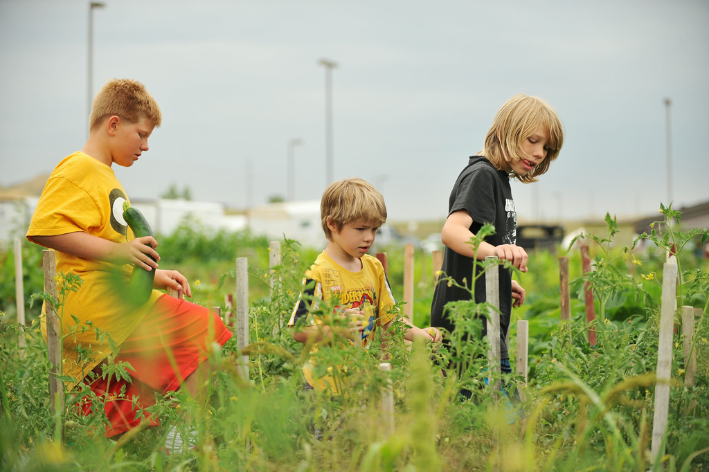From left, Luke Singer, 10, Kasey Singer, 6, and Jesse Singer, 9, trek on through the a field of produce during the Youth Garden Harvest Thursday at Sheridan College. The Sheridan College Agriculture Students, Pre-Professional students, contributed the youth garden with collaboration by other community gardeners who opened most of the community garden for the youth garden harvest this year at no cost to the children and their families. Those involved with building the garden credits community gardener Bruce Sprenger as instrumental in the success of the garden through the donation of his time, labor, and seasoned advice. Children from the community have been visiting the garden throughout the summer to check on the progress of the produce and to engage in educational activities provided by the college students. The Sheridan Press|Justin Sheely.