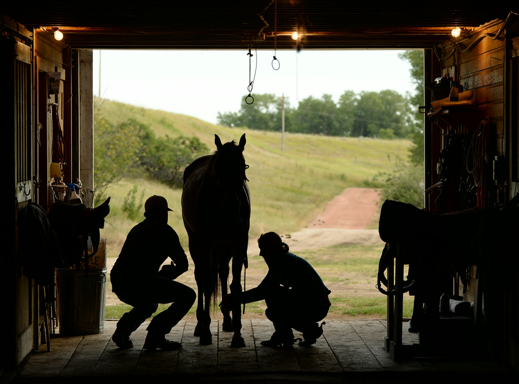 Horse trainers Gus Whitelaw, left, and his fiancée Allie Busch remove riding equipment from a horse after a ride Wednesday at the Brinton Barn on the Quarter Circle A Ranch near the Brinton Museum. The St. Louis, Missouri, natives start horses and trains them for polo playing. Whitelaw also works with the Flying H Polo and announces for the polo games in Big Horn. The historic barn was built by Bradford Brinton in 1928. After Brinton's death, the Wallop family leased the barn to dress their horses for playing polo at the polo club adjacent to the barn. The barn is currently being leased to the Flying H Ranch. The Sheridan Press|Justin Sheely.