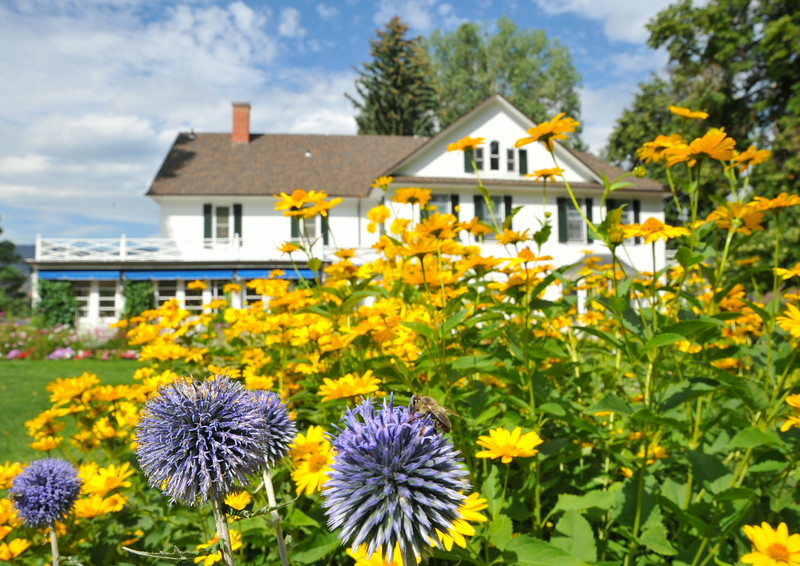Blooming flowers attract bees and other insects in the garden at the Brinton Museum in Big Horn Wednesday morning. The garden was recreated with references and inspiration from a Hans Kleiber painting. The Sheridan Press|Justin Sheely.