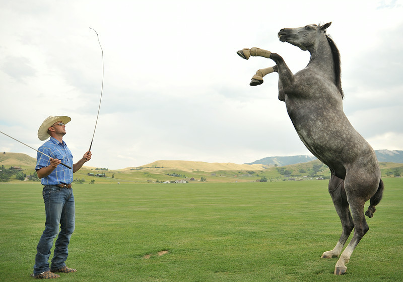 Australian native Dan James brings his trained horse 'Swampy' to rear up during a demonstration Thursday at the Big Horn Equestrian Center. James will be demonstrating equine entertainment between the afternoon games this Sunday at the polo fields. The Sheridan Press|Justin Sheely.