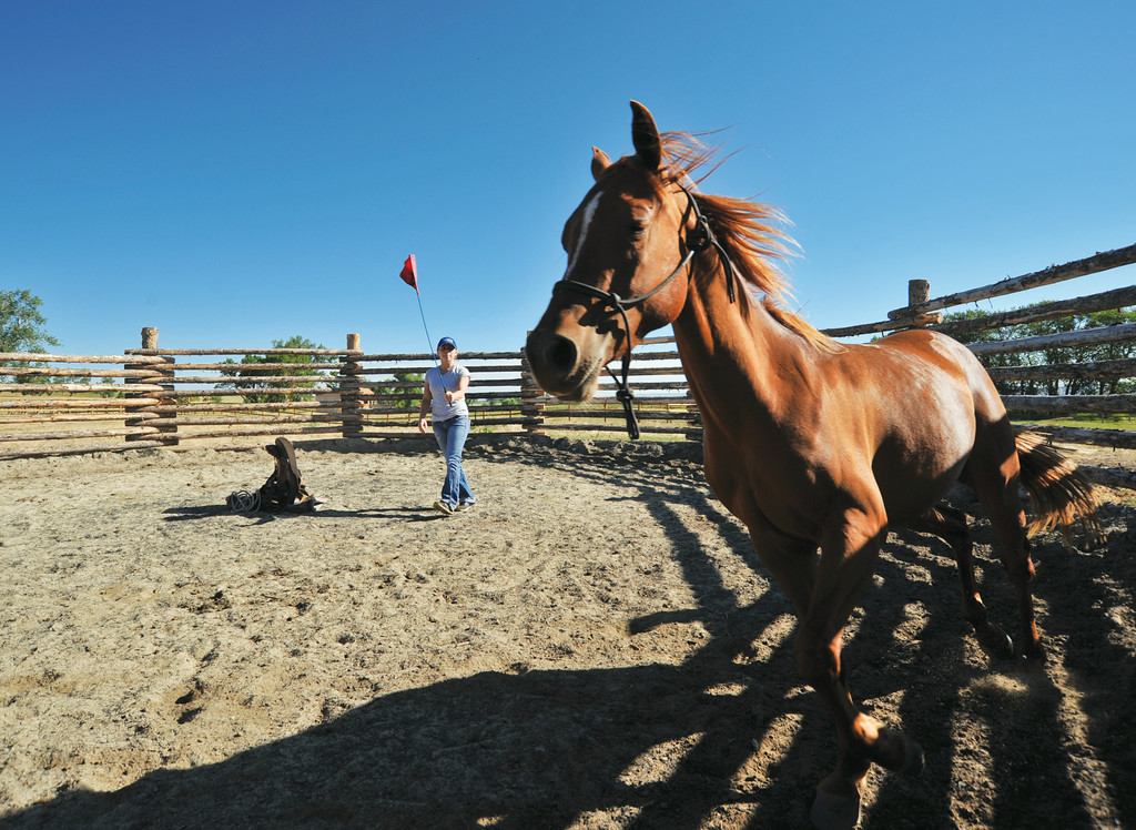 Joscelyn Gray trains a 2-year-old mare in the round pen Friday morning at the Jan Pamela Ranch near Big Horn. The trainers have been working on the young horse for the past 3 weeks to get her used to the sounds, equipment, and humans. Lead Trainer and Horse Breeder Sebastian Mariani uses an Argentinian method called 'Doma India' for starting horses and building trust. The Sheridan Press will feature a story on Mariani's horse breeding methods for raising polo horses at the Jan Pamela Ranch–the story will run next Saturday. The Sheridan Press|Justin Sheely.