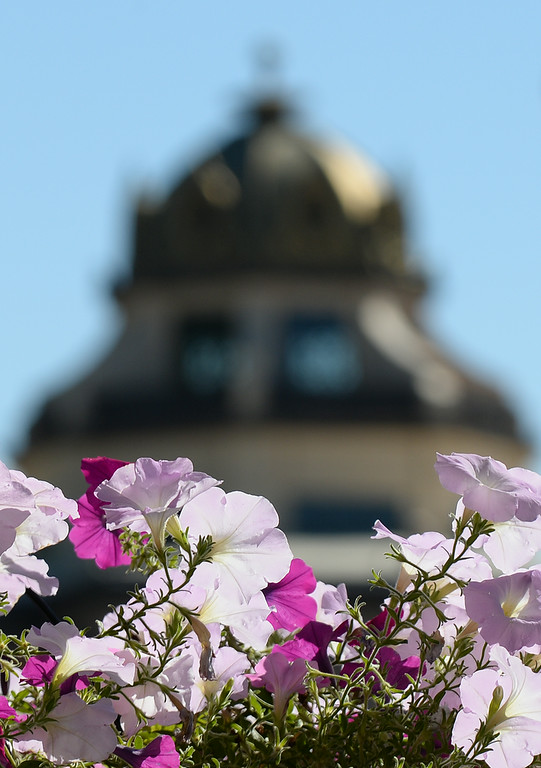 A hanging basket of flowers are photographed near the Sheridan County Courthouse Thursday afternoon on Main Street. The flowers downtown are maintained by the Downtown Sheridan Association. The Sheridan Press|Justin Sheely.