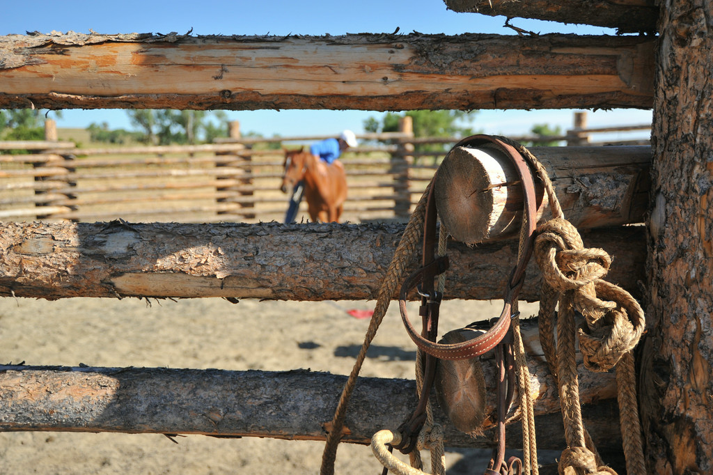 Ropes and a bridle are hung outside the round pen as Sebastian Meriani starts a 2-year-old mare Friday morning at the Jan Pamela Ranch near Big Horn. The trainers have been working on the young horse for the past 3 weeks to get her used to the sounds, equipment, and humans. Mariani uses an Argentinian method called 'Doma India' for starting horses and building trust. The Sheridan Press will feature a story on Mariani's horse breeding methods for raising polo horses at the Jan Pamela Ranch–the story will run next Saturday. The Sheridan Press|Justin Sheely.