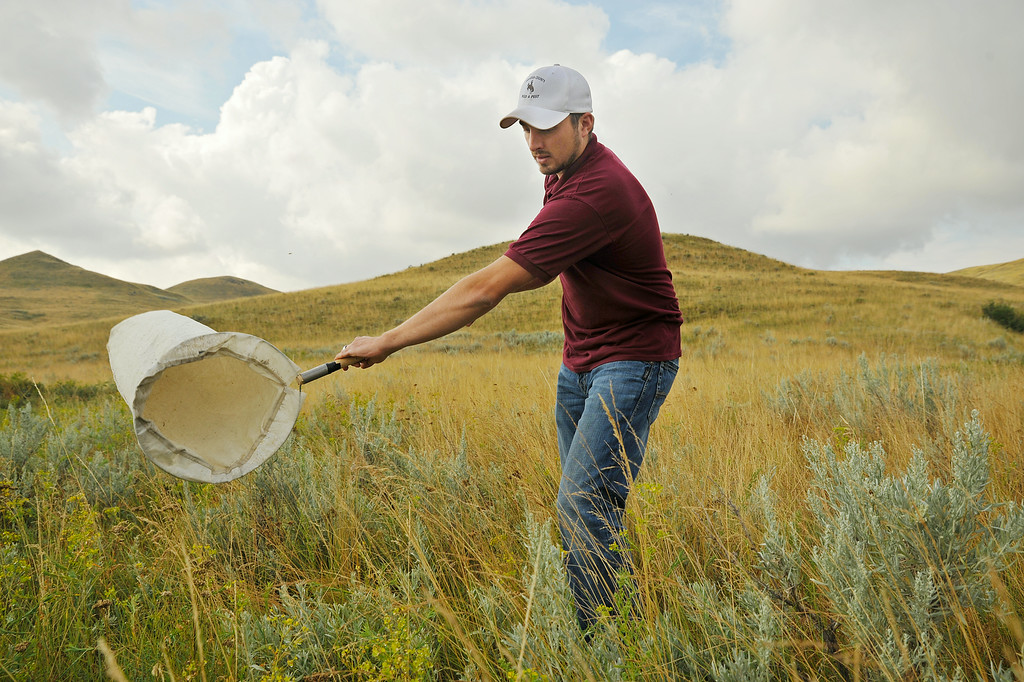"Luke Sander of the Sheridan County Weed and Pest whips a bug net back and forth to collect bugs Wednesday on a ranch off S R Buffalo Creek Road East of Sheridan. Sander uses the net and separator to collect the Aphthona ""Leafy Spurge"" Beetles to be dispersed in other areas of Sheridan County to control the infection of the invasive Leafy Spurge plant. The Aphthona Beetles feed solely on the Leafy Spurge plant, which makes them a viable and environmentally friendly method of controlling the weeds. The Sheridan Press