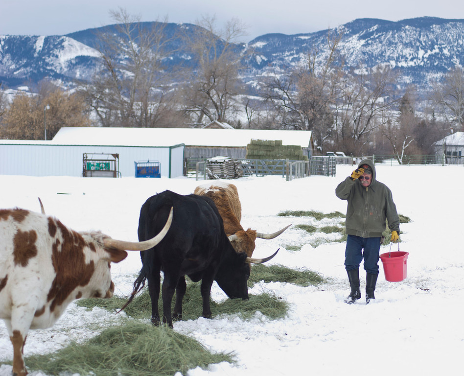 Toby Johnson walks with a bucket of alfalfa cubes which he feeds during especially cold days at his ranch in Big Horn on Tuesday.